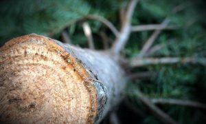 rent a Xmas tree