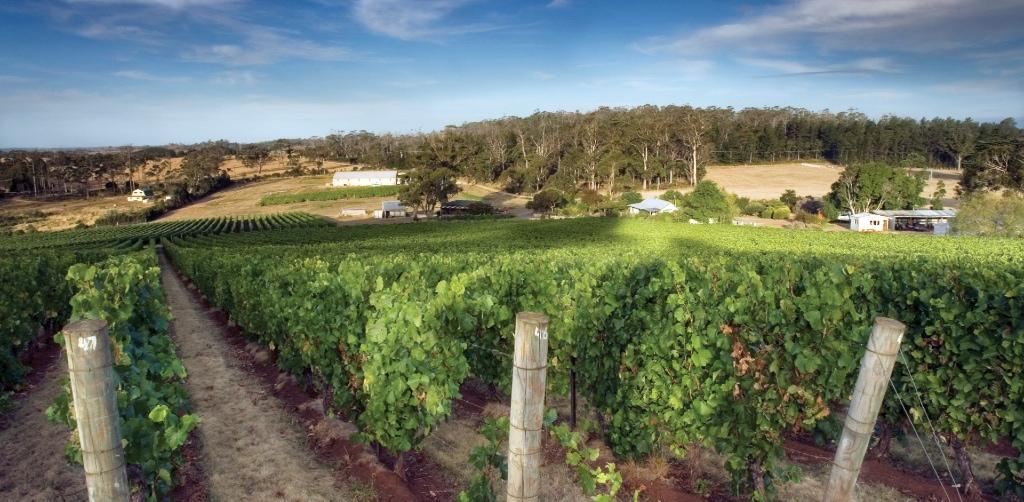 Dalrymple Vineyards